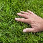 lawn fertilization schedule