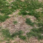 soil-compaction