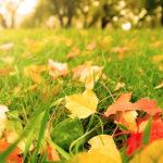 leaves good for grass