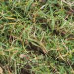 overseeding-lawn-in-fall